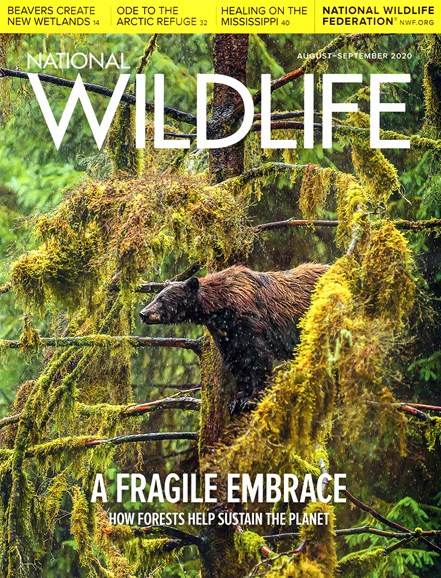 National Wildlife Cover - 8/1/2020