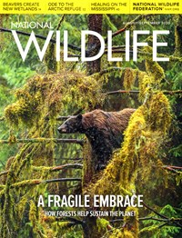 National Wildlife Magazine   8/2020 Cover