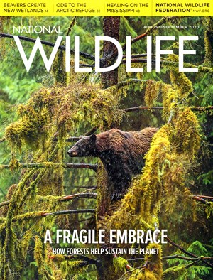 National Wildlife Magazine | 8/2020 Cover
