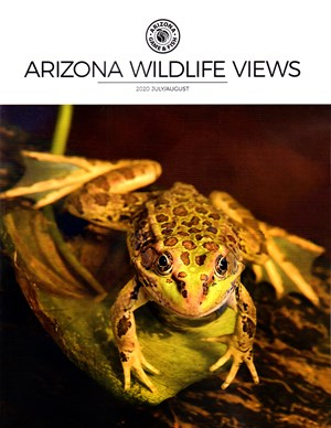 Arizona Wildlife Views Magazine | 7/2020 Cover